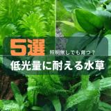 低光量に耐える水草5選