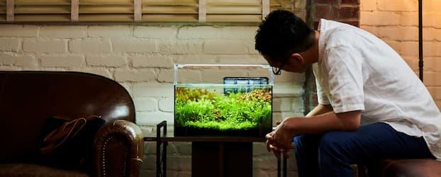 GEX aquaristaイメージ