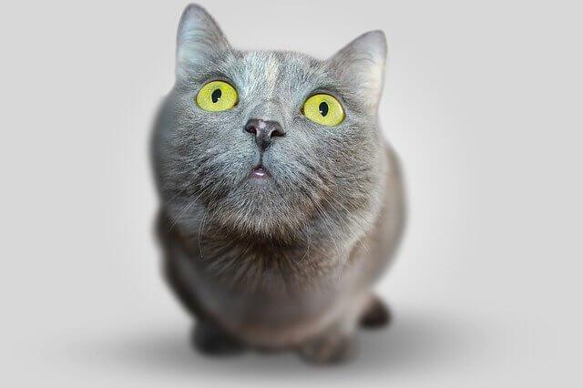 臭そうな顔の猫