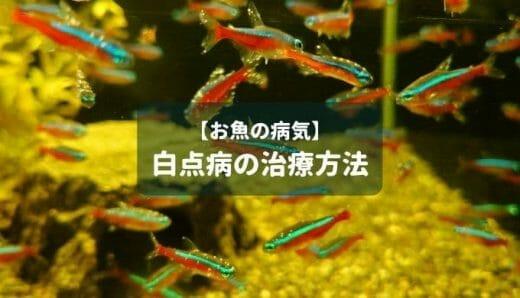 【お魚の病気】白点病の治療法